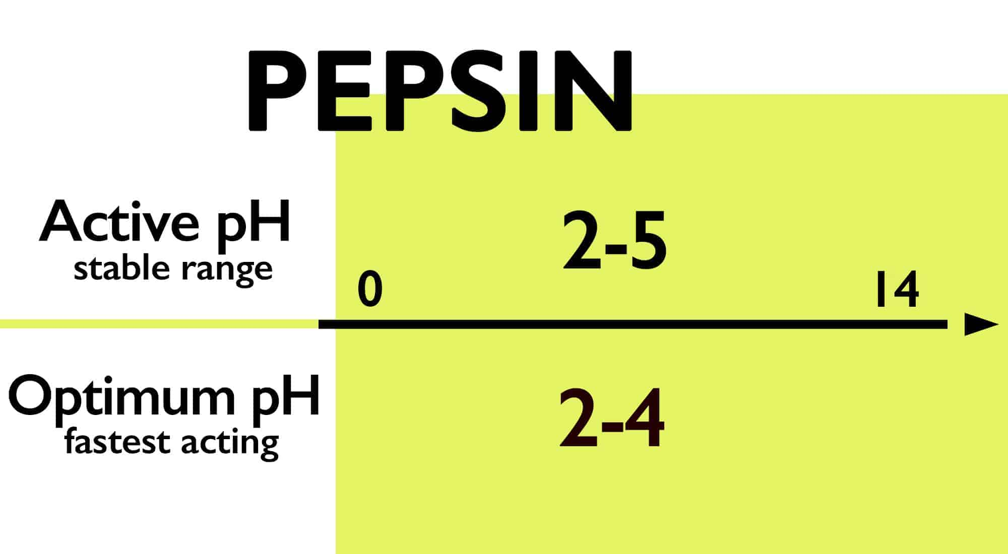serrapeptase vs pepsin